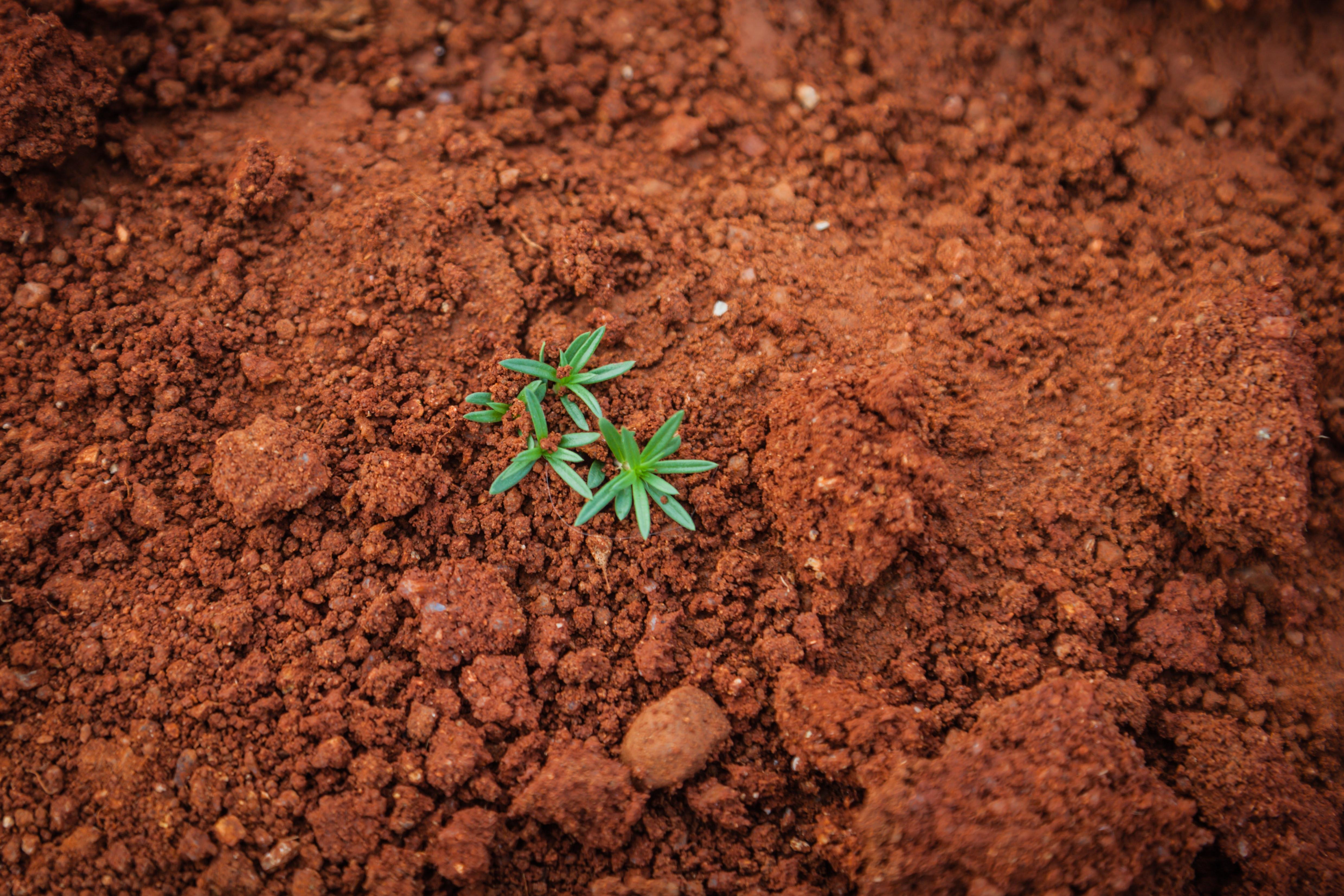plan in soil