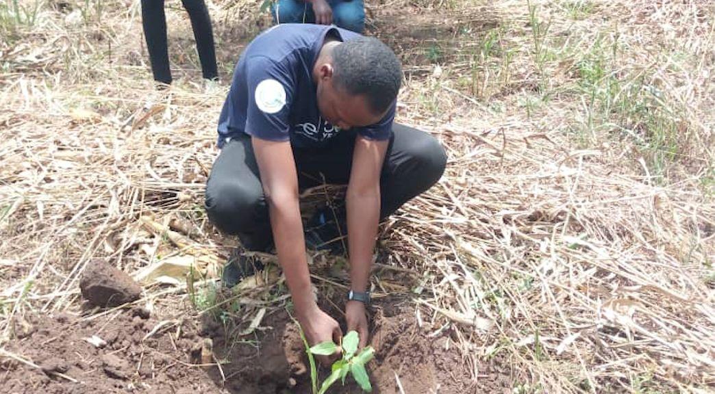 man planting a tre