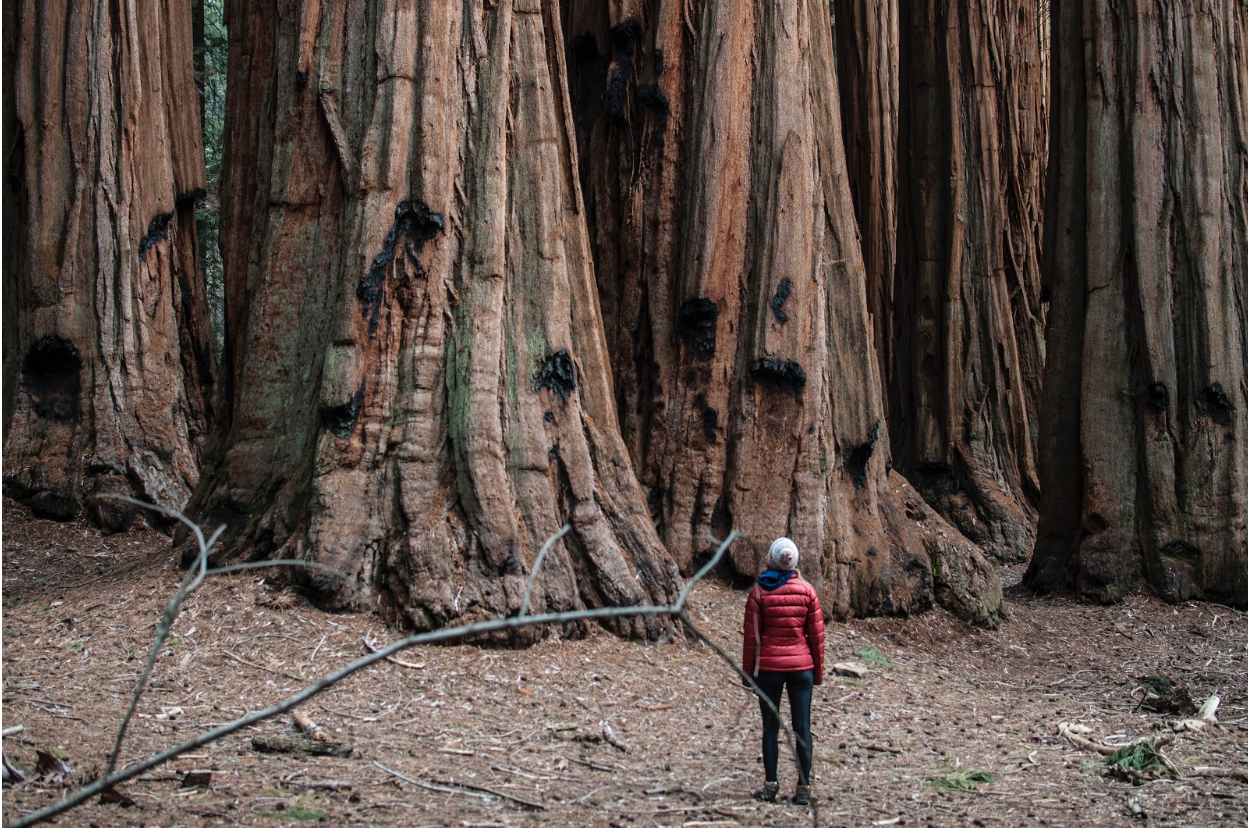 Woman standing in front of very large trees