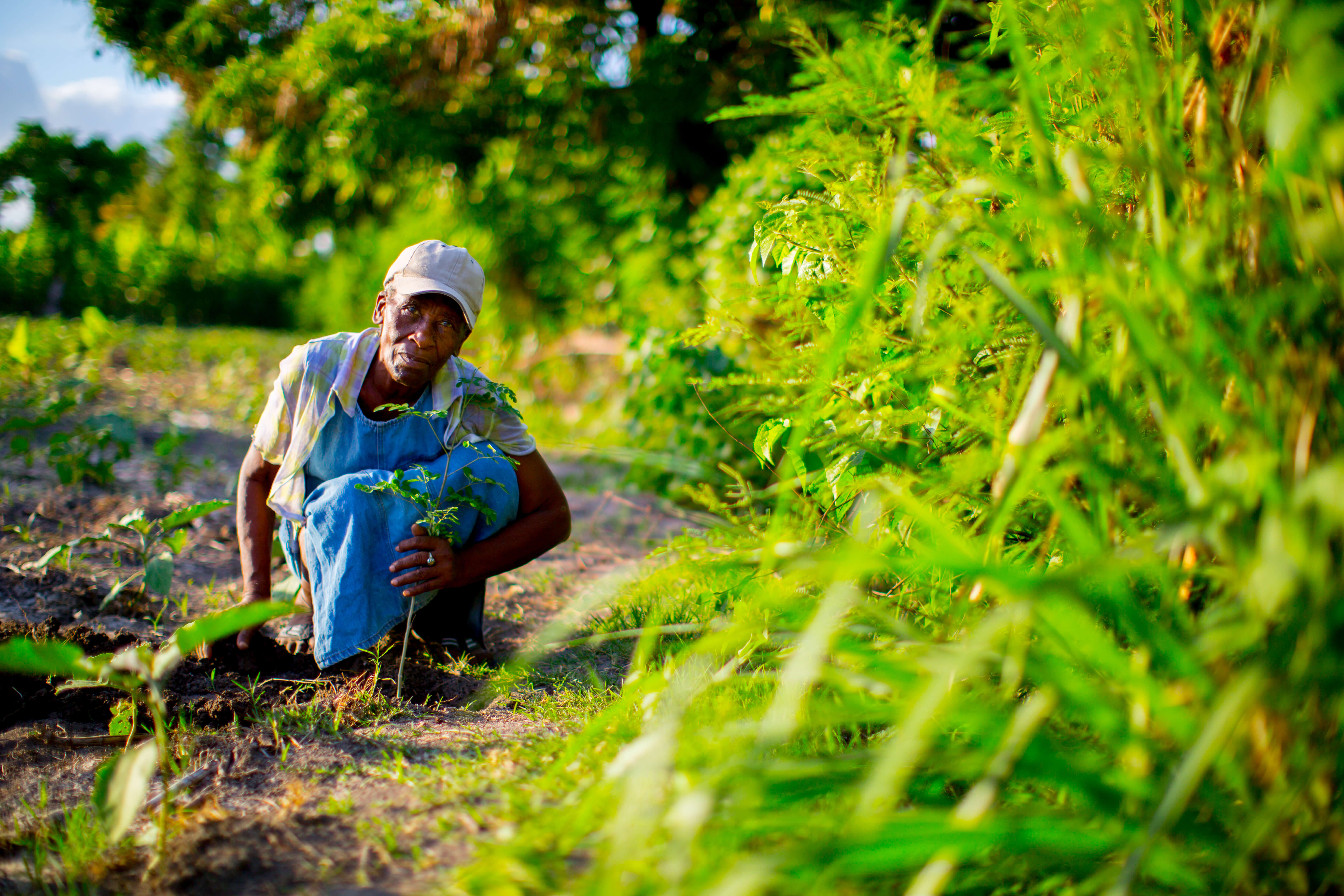 support global farmers category - HD5760×3840