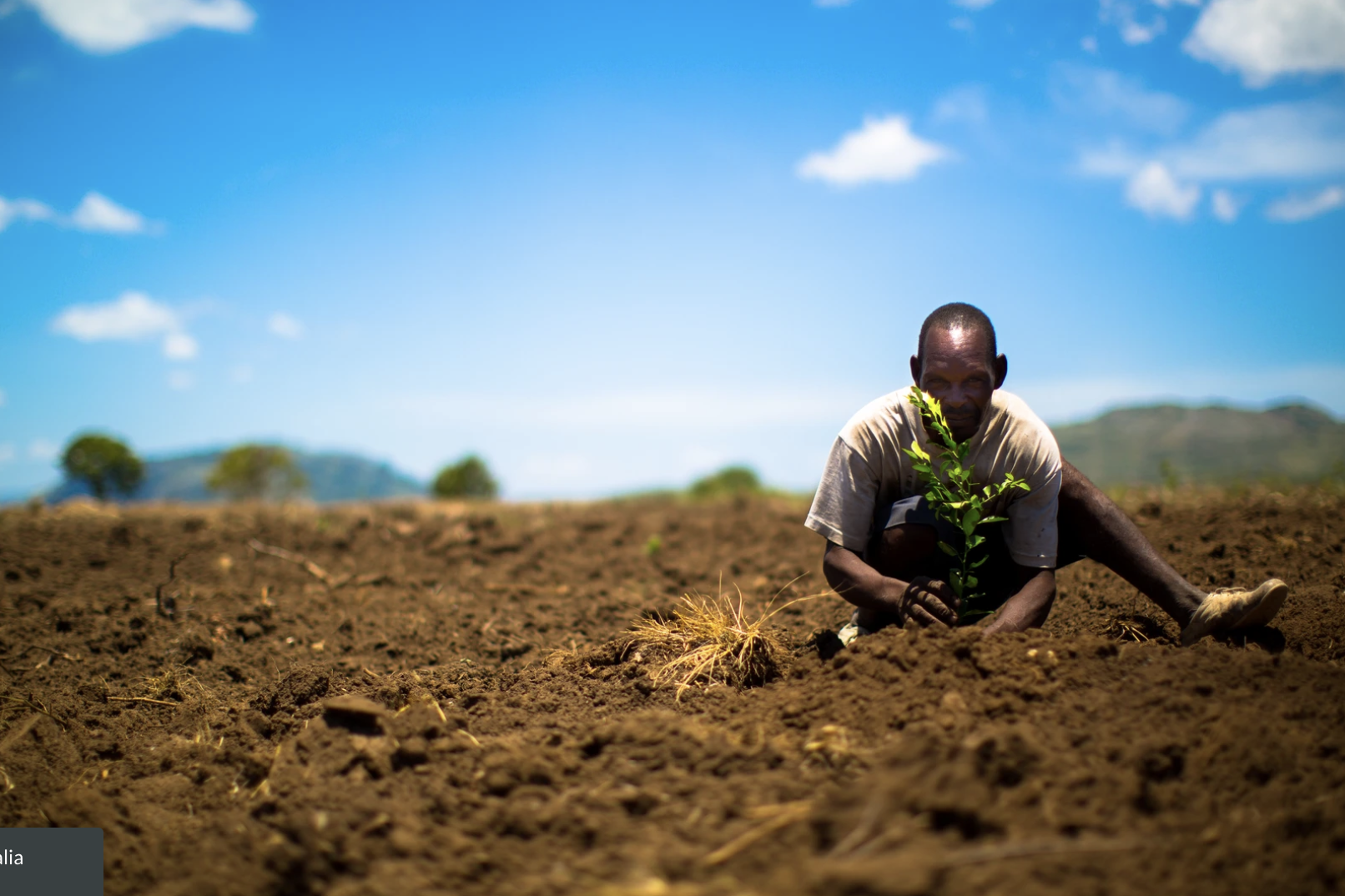 Man sitting in dirt planting a tree
