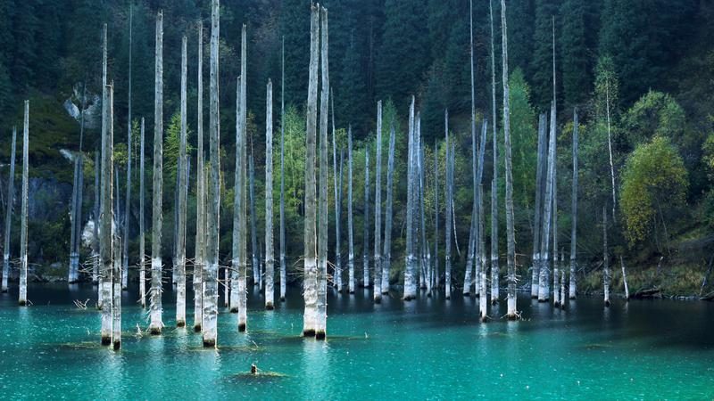 dead trees standing in a lake