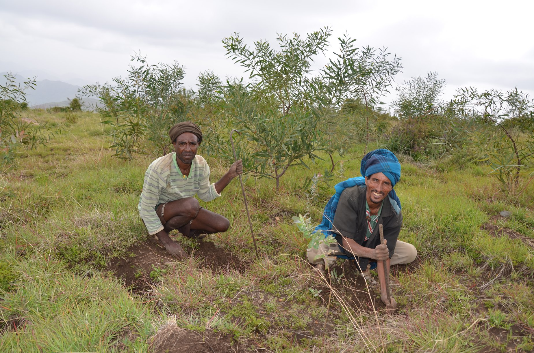 two men planting trees and smiling