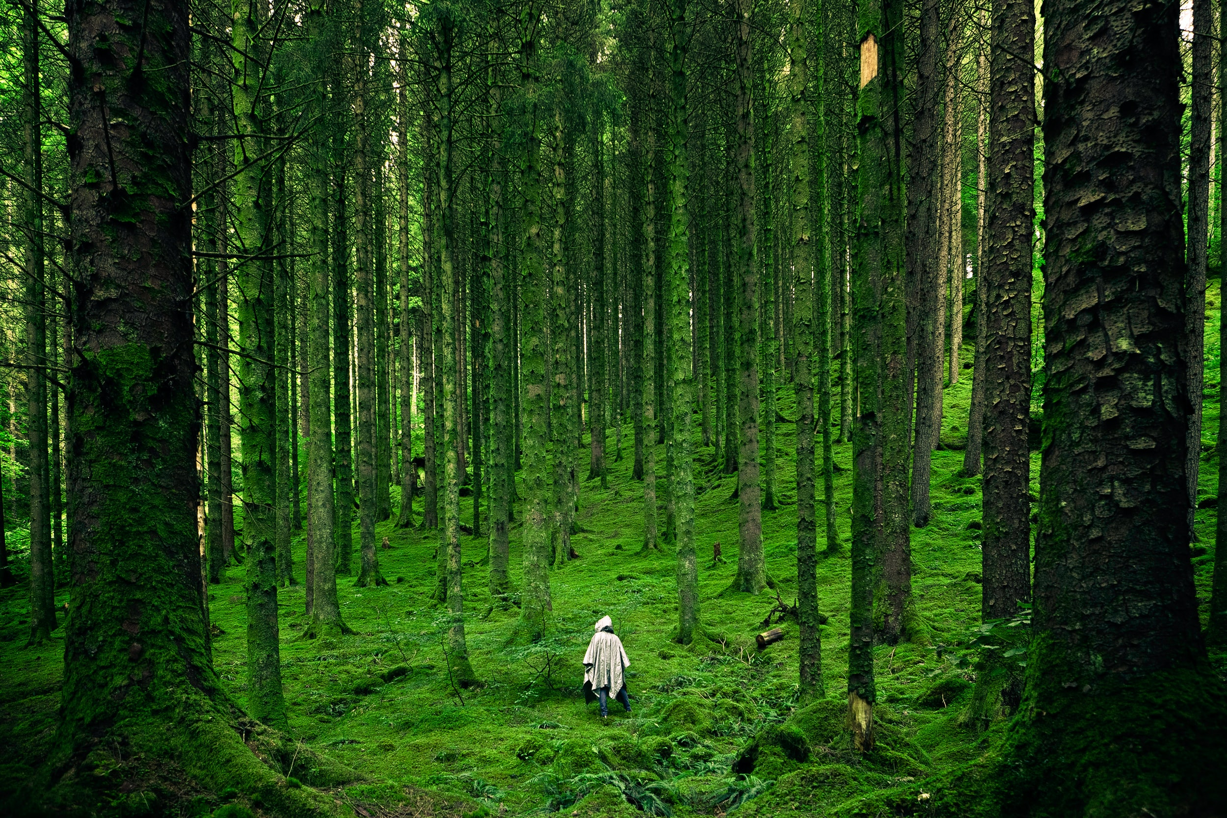 person in forest
