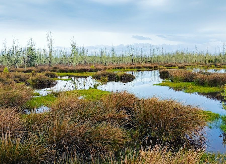 peat or swamp, a watery grassy landscape