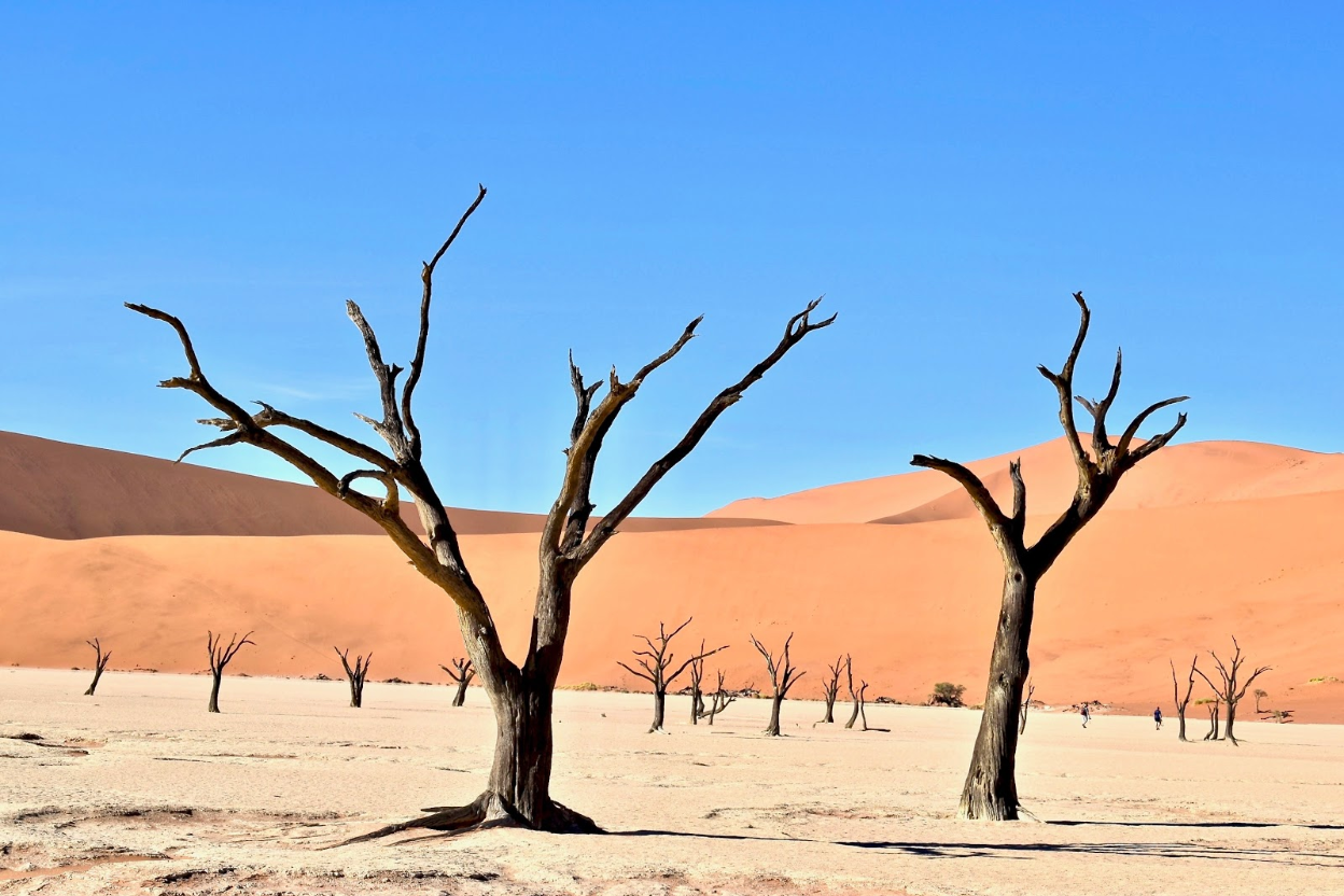 Trees with no leaves in a desert