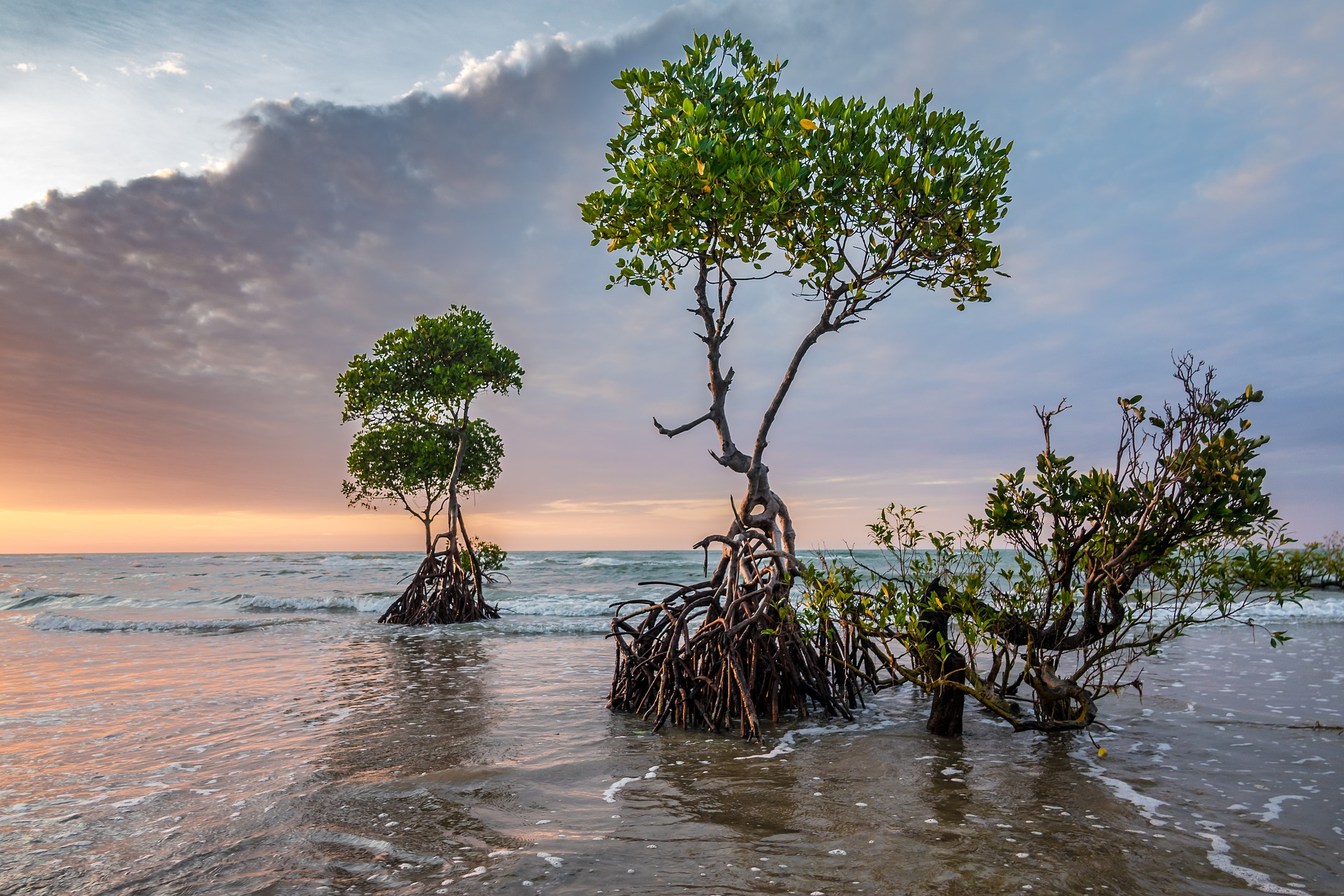 Trees with exposed roots at the edge of the ocean