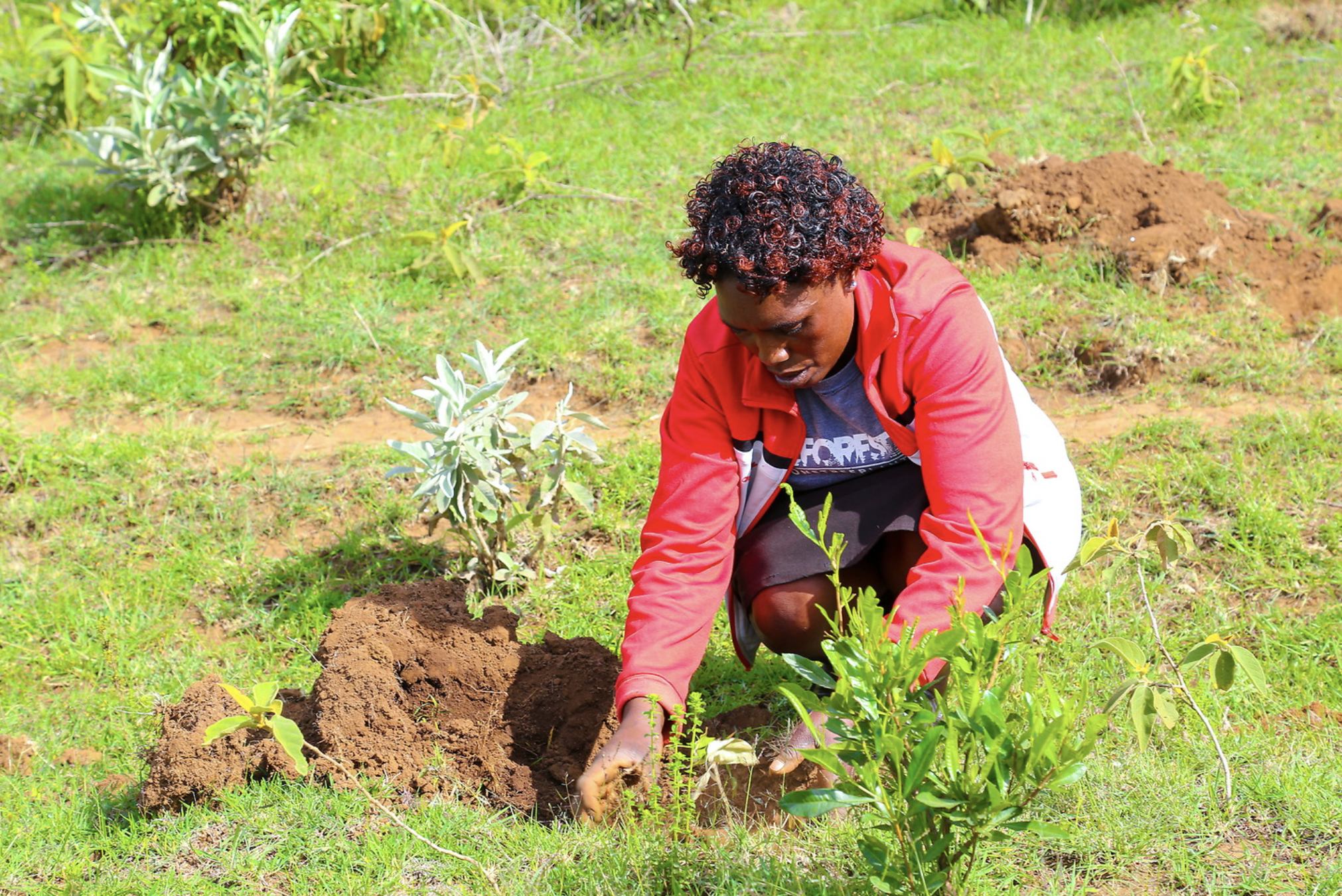 woman in red jacket planting a tree