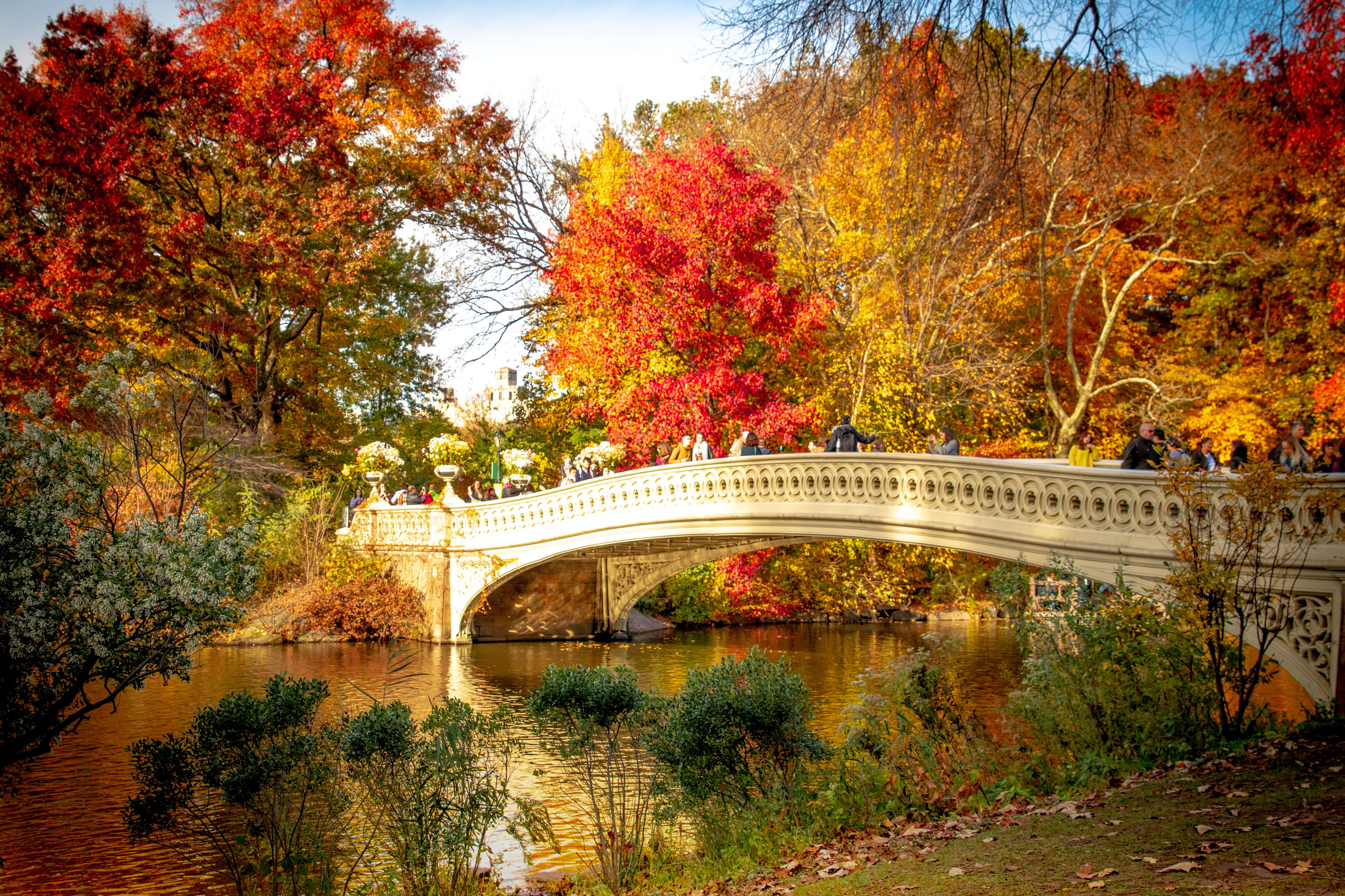Leaves changing color in a park with a bridge