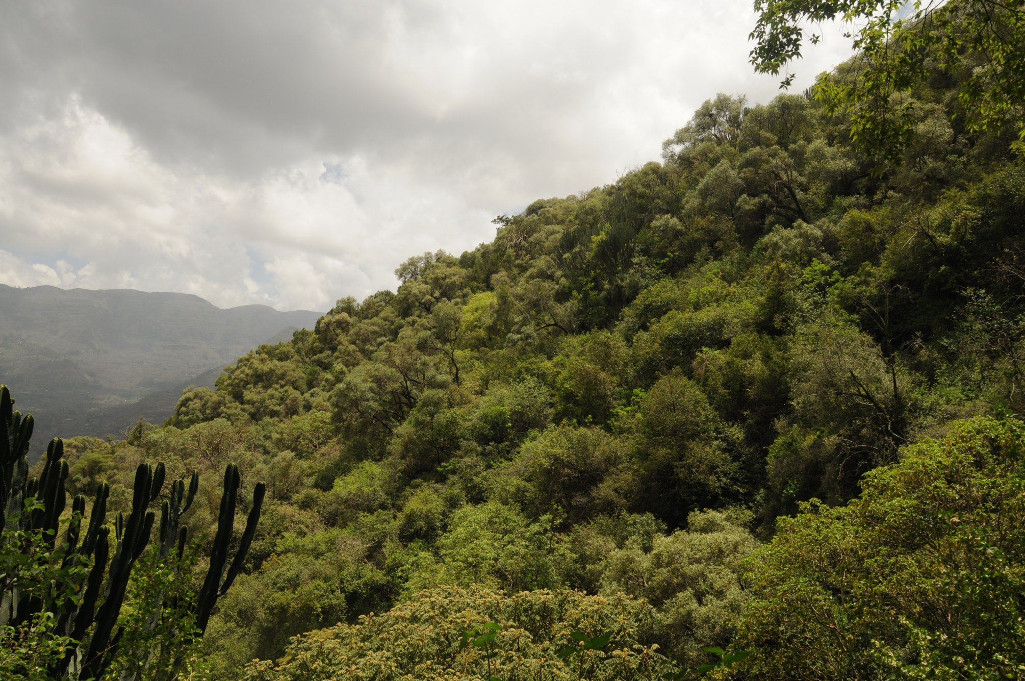 Ethiopian forested hillside