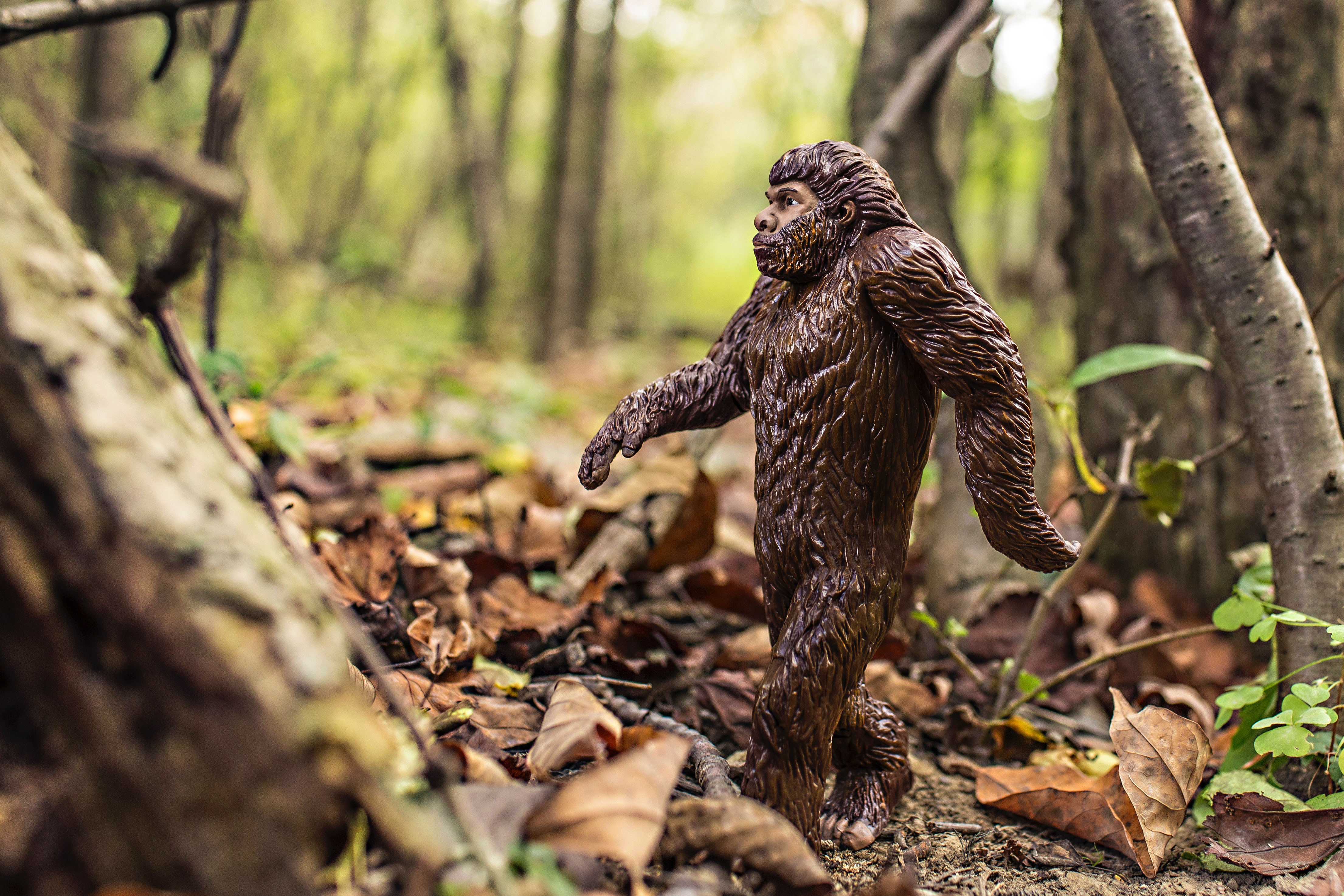 toy in forest
