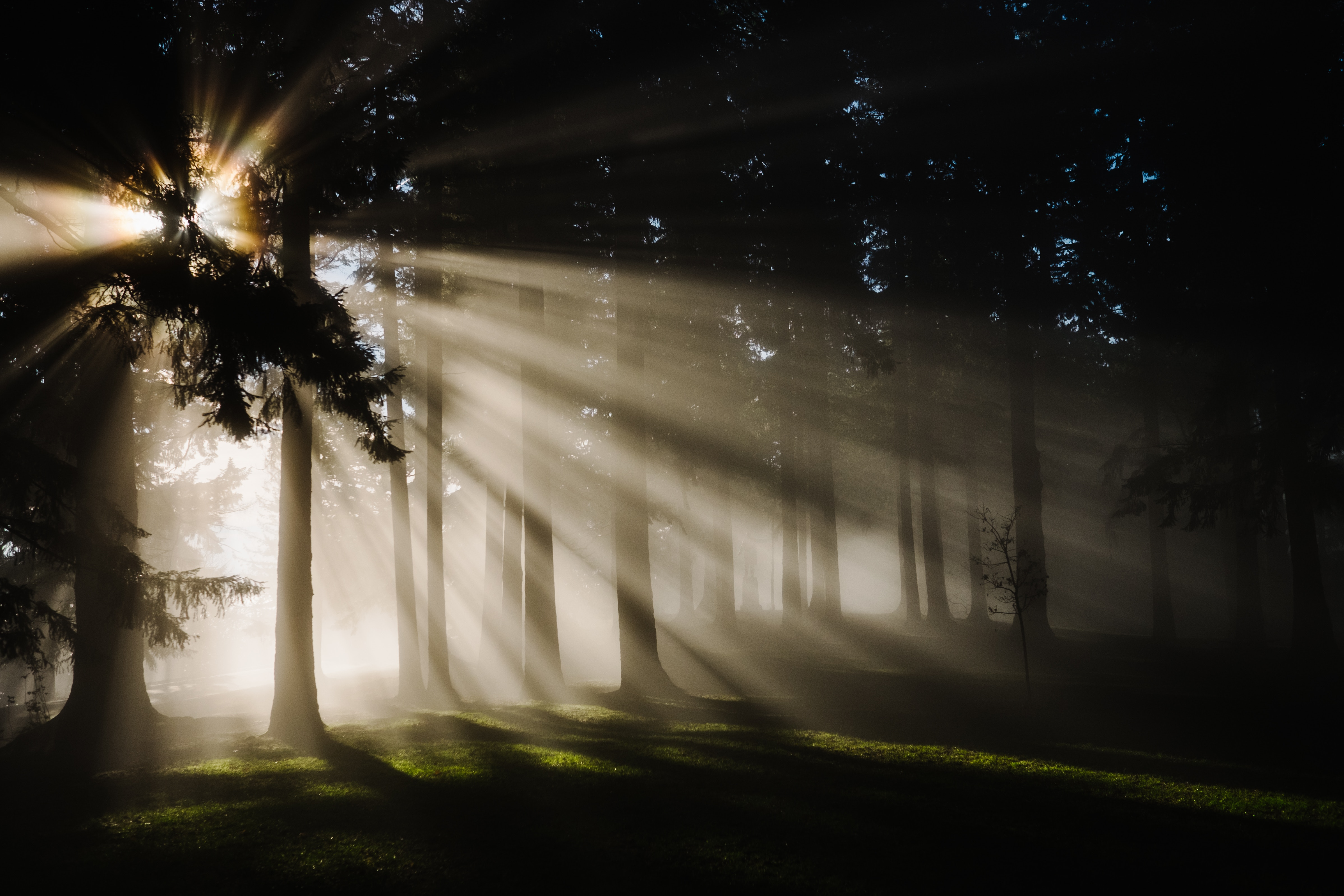 Shadowy forest scene with sun shining through the branches