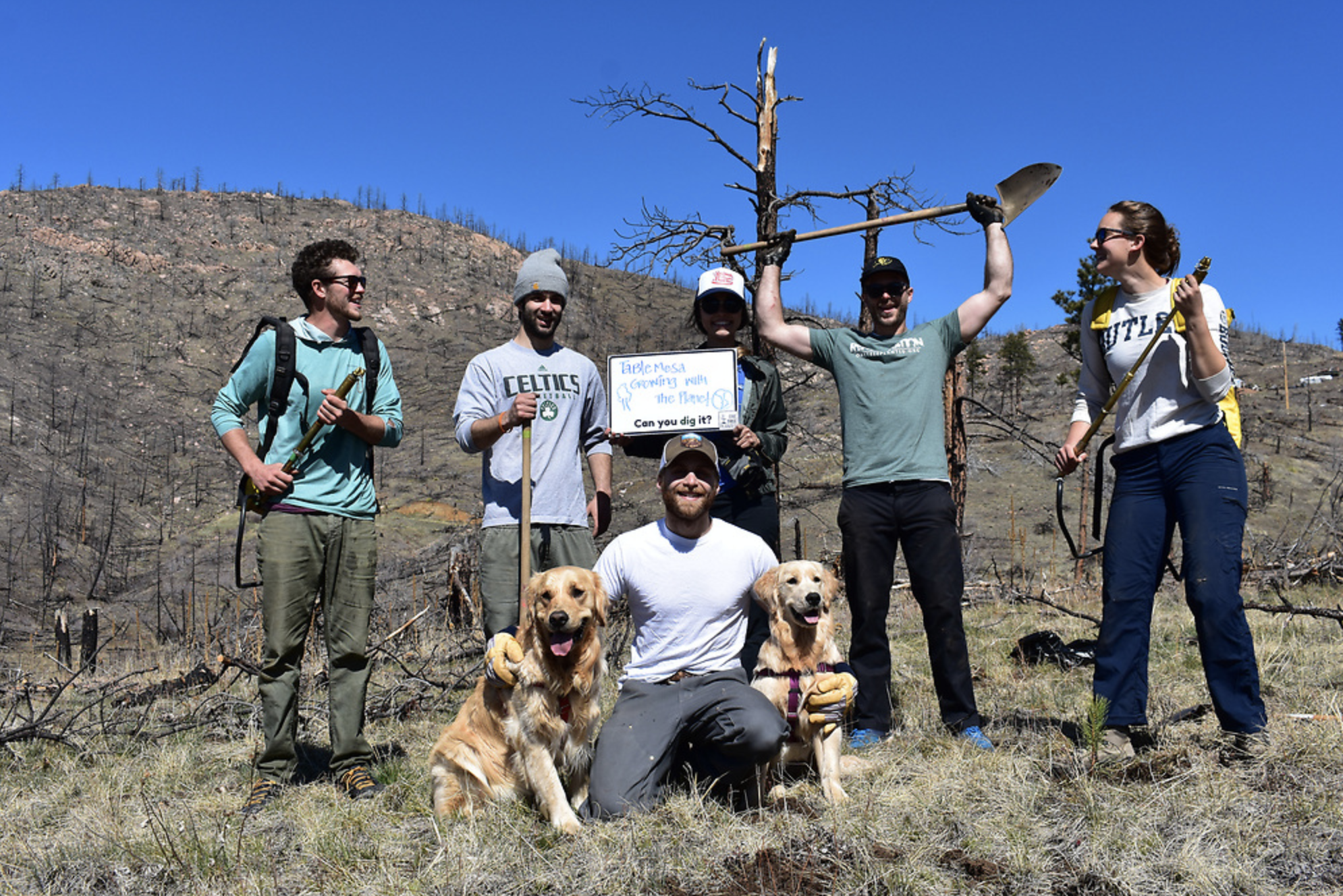group of people with gold retriever dogs planting trees