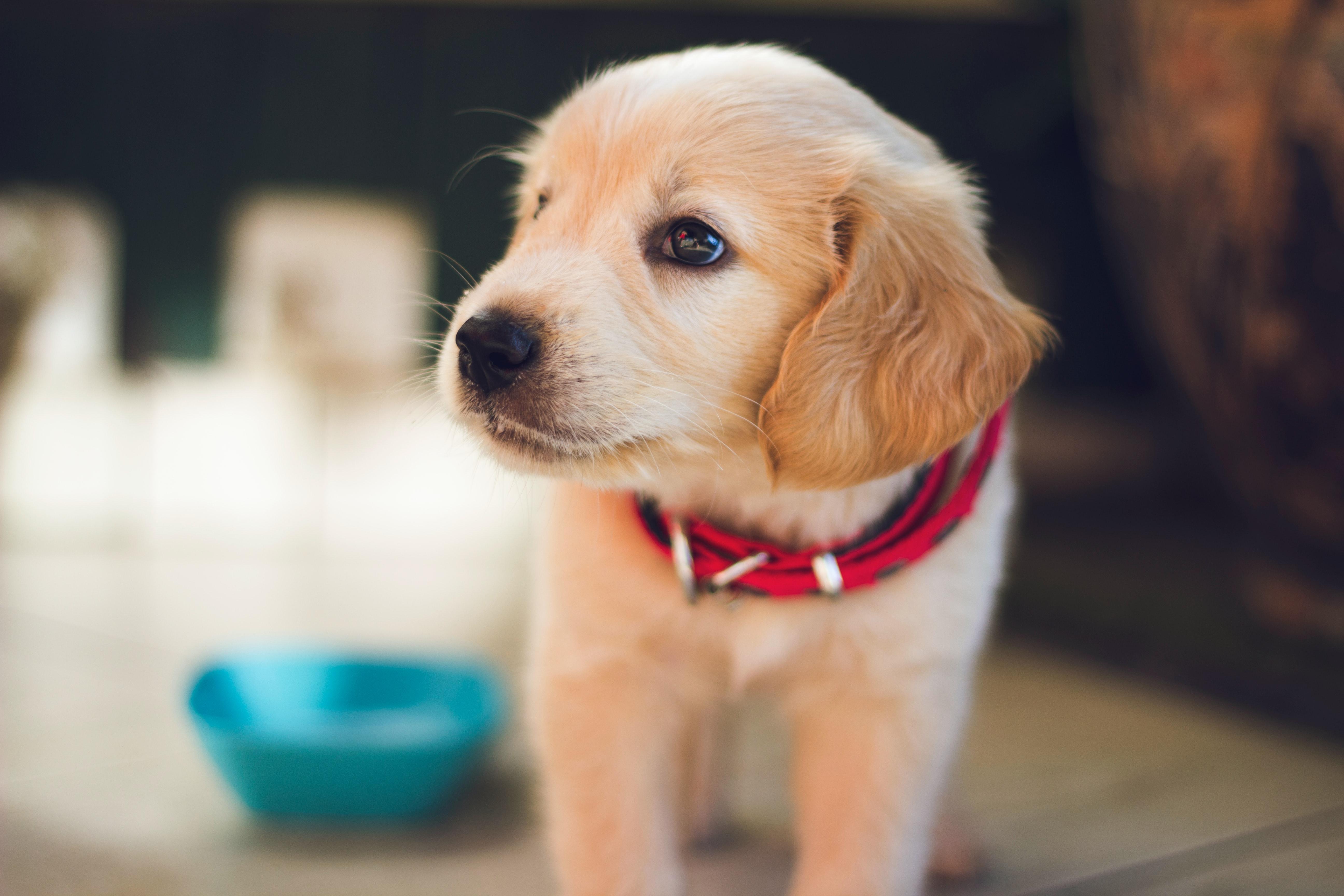 Puppy - grain free dog food blog