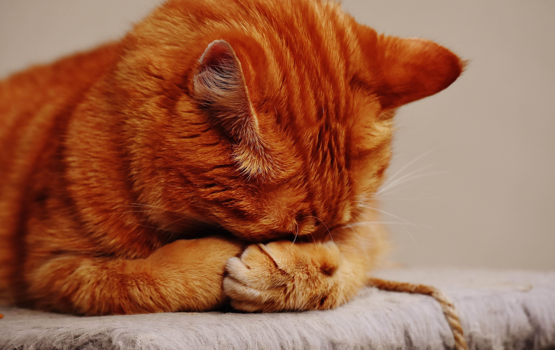 Malalties en gats per poca beguda
