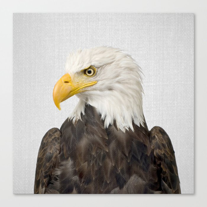 Eagle - Colorful Canvas Wall Art Print by Gal Design