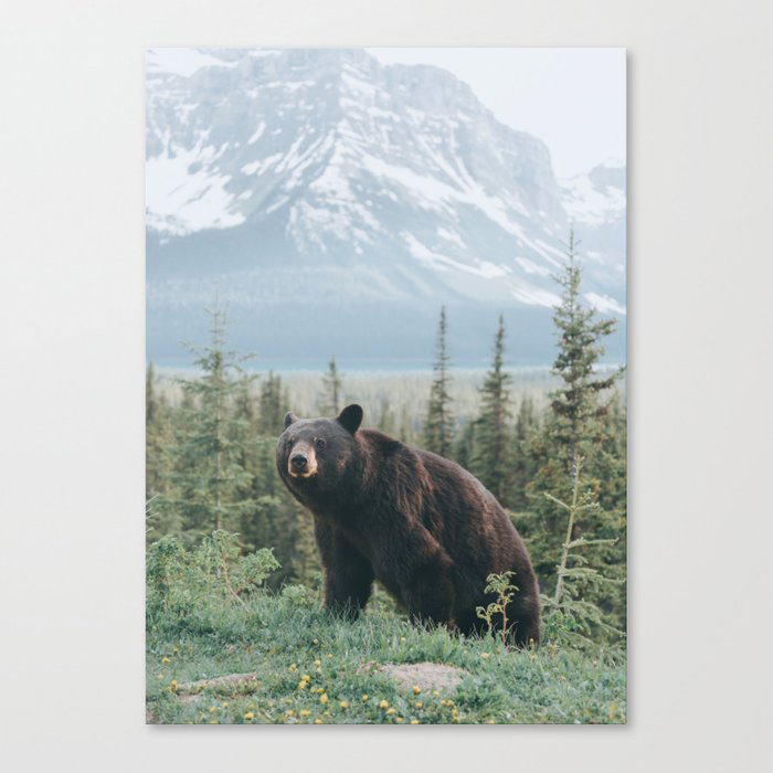 Bear in the Mountains Canvas Wall Art Print by wanderhaus