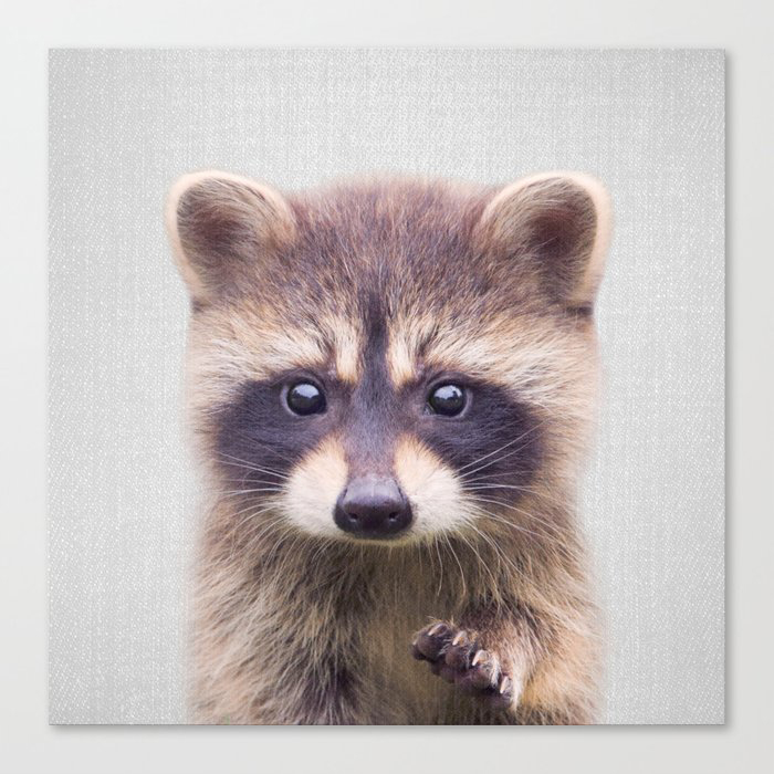 Raccoon - Colorful Canvas Wall Art Print by Gal Design