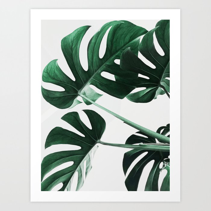 Monstera, Leaves, Plant, Green, Scandinavian, Minimal, Modern, Wall art Art Print by SCANDI HOME