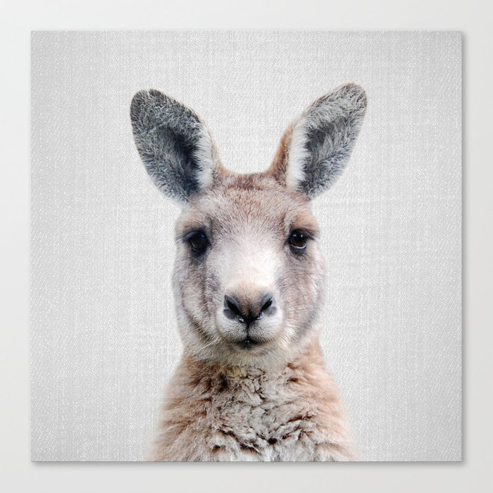 Kangaroo - Colorful Canvas Wall Art Print by Gal Design