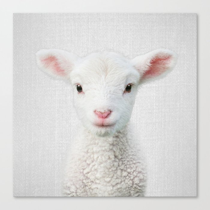 Lamb - Colorful Canvas Wall Art Print by Gal Design