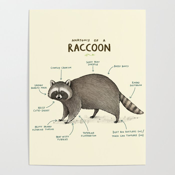 Anatomy of a Raccoon Poster by Sophie Corrigan