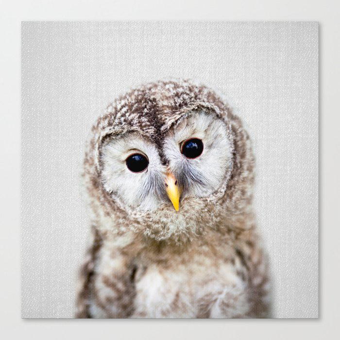 Baby Owl - Colorful Canvas Wall Art Print by Gal Design