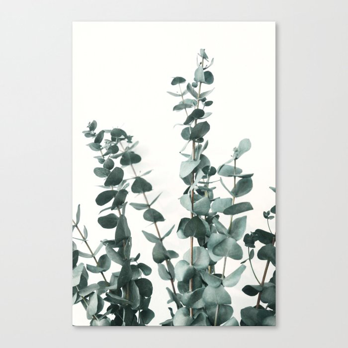 Eucalyptus Leaves Canvas Print by ArtPrInk Studio