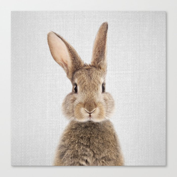 Rabbit - Colorful Canvas Wall Art Print by Gal Design