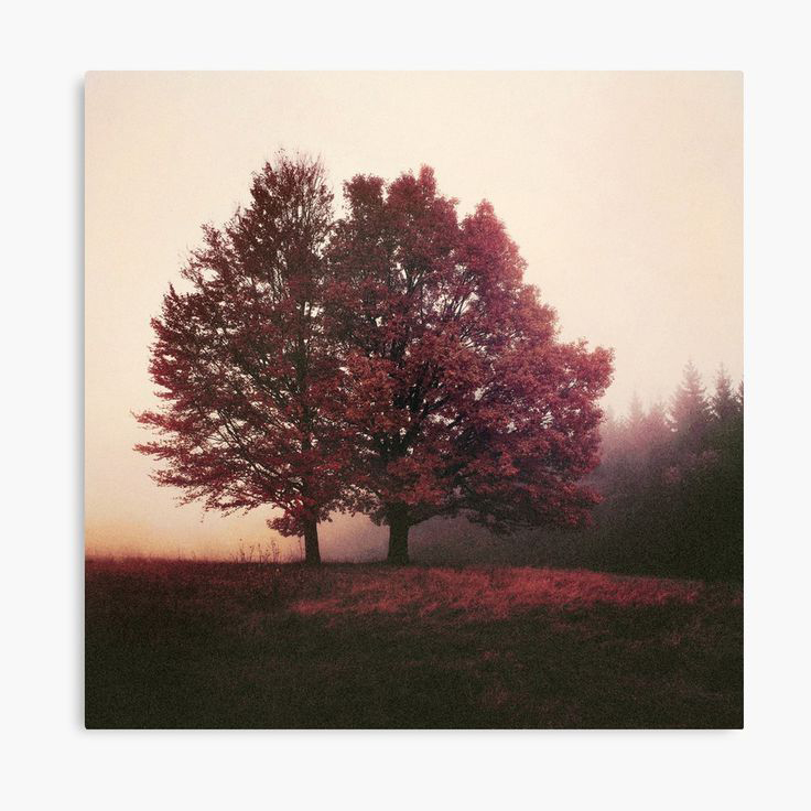 I Feel You Landscape Photography Canvas Wall Art Print by Tordis Kayma