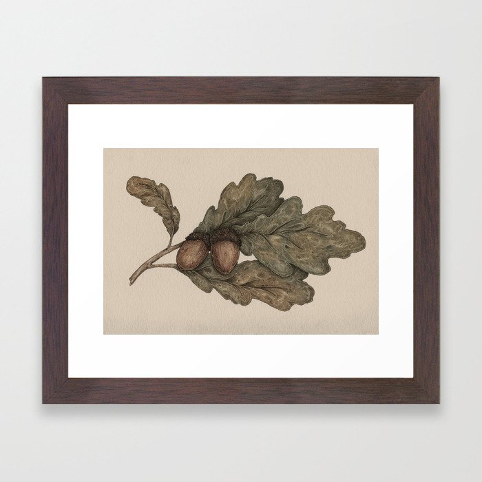 Acorns Framed Art Print by Jessica Roux