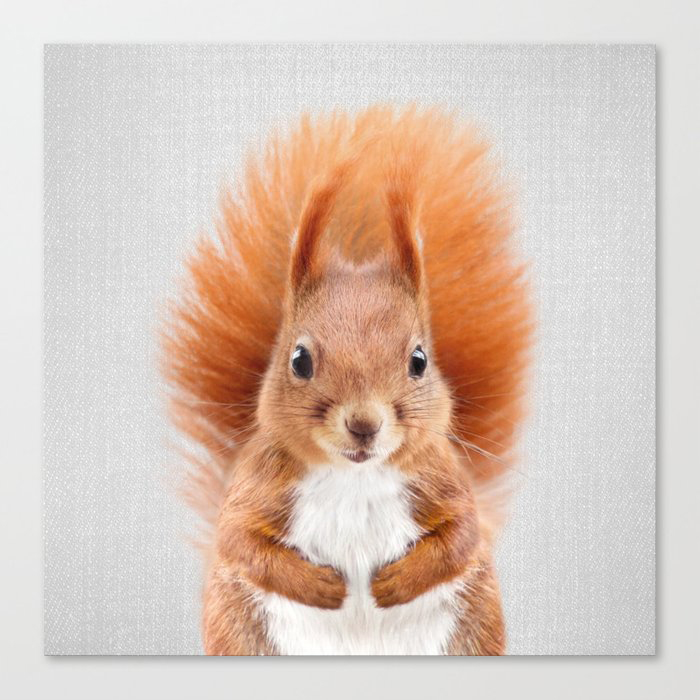 Squirrel 2 - Colorful Canvas Wall Art Print by Gal Design