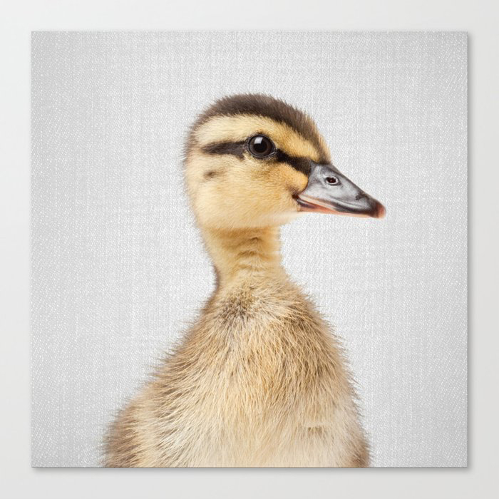 Duckling - Colorful Canvas Wall Art Print by Gal Design