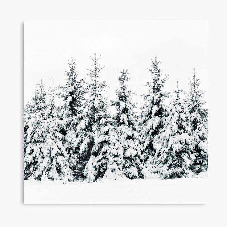 Snow Porn Landscape Photography Canvas Wall Art Print by Tordis Kayma