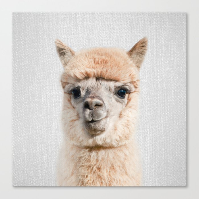 Alpaca - Colorful Canvas Print by Gal Design