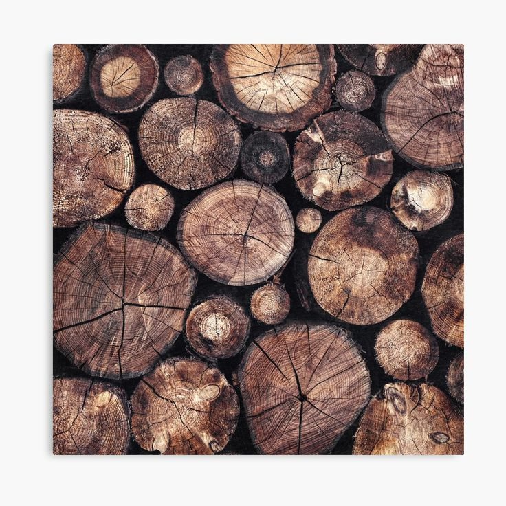 The Wood Holds Many Spirits Landscape Photography Canvas Wall Art Print by Tordis Kayma