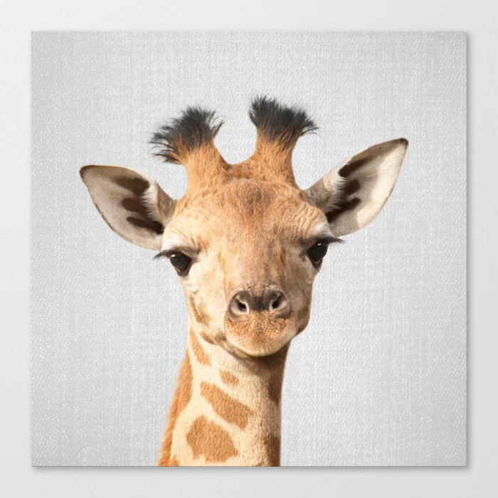 Baby Giraffe - Colorful Canvas Print by Gal Design