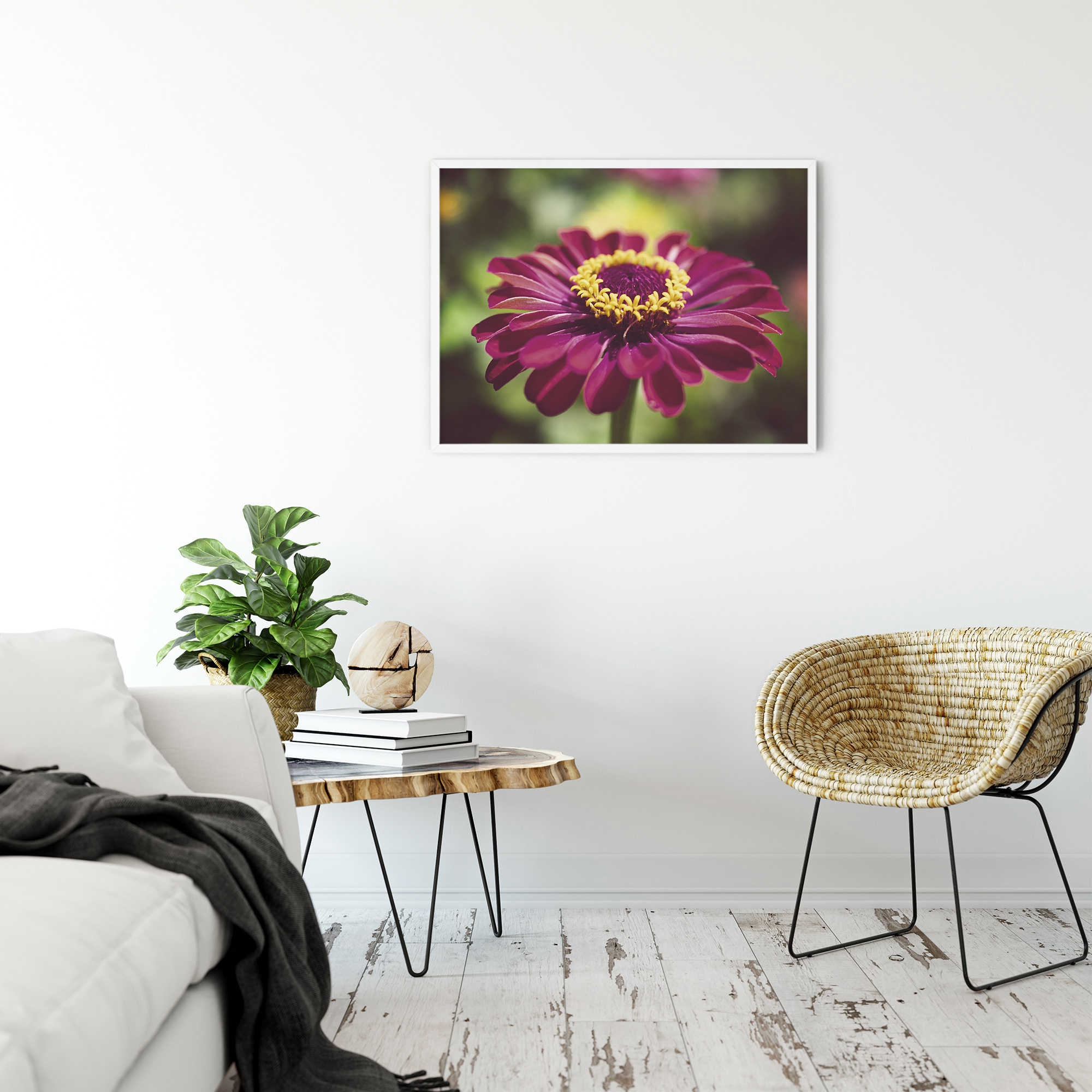 Moody Young - And- Old Age Pink Zinnia Flower Bloom Nature Photography Wall Art Prints Unframed and Fine Art Canvas Prints