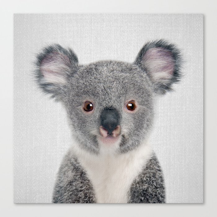 Baby Koala - Colorful Canvas Wall Art Print by Gal Design
