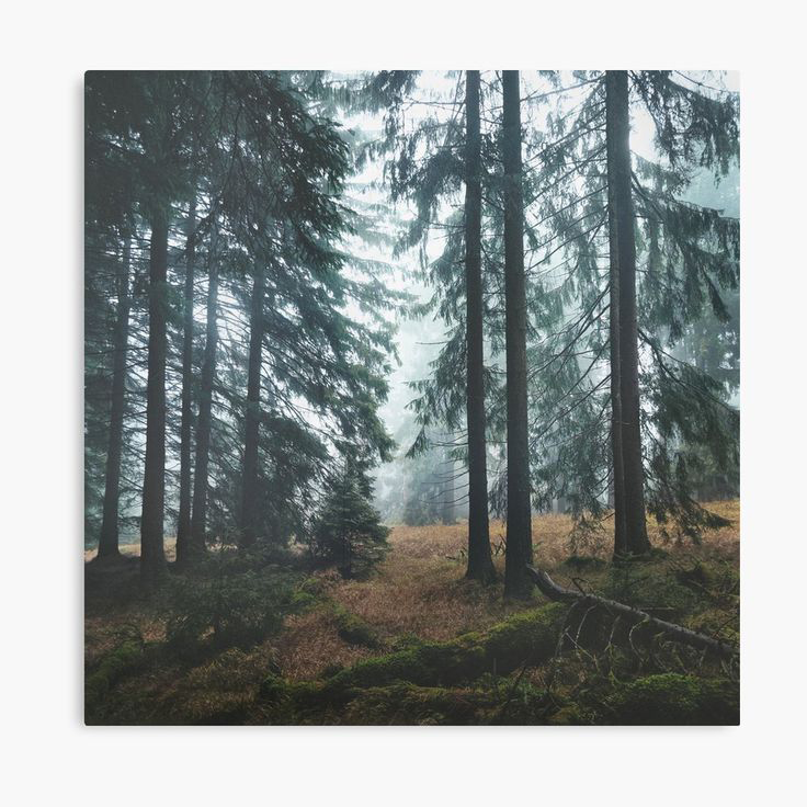 Deep In The Woods Landscape Photography Canvas Wall Art Print by Tordis Kayma