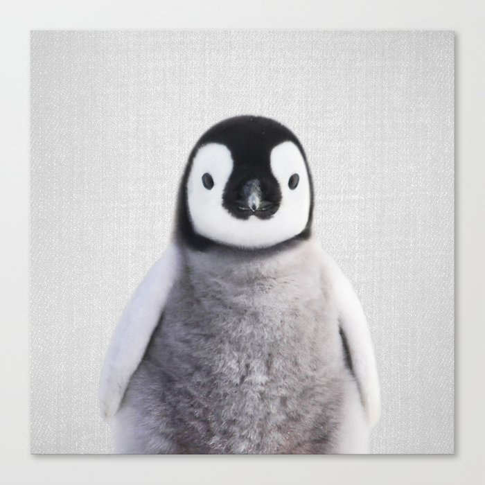 Baby Penguin - Colorful Canvas Wall Art Print by Gal Design