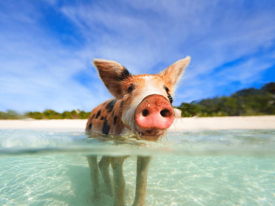 Pig Island, Bahamas