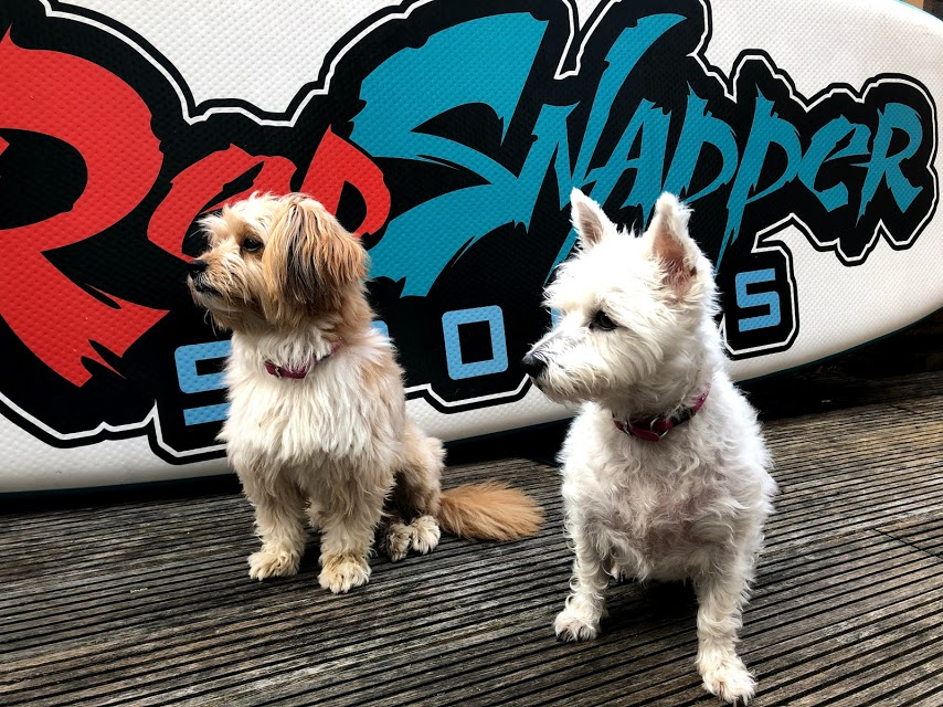 Duble Trouble - Honey and Teddi, the Red Snapper Sports SUP Pups