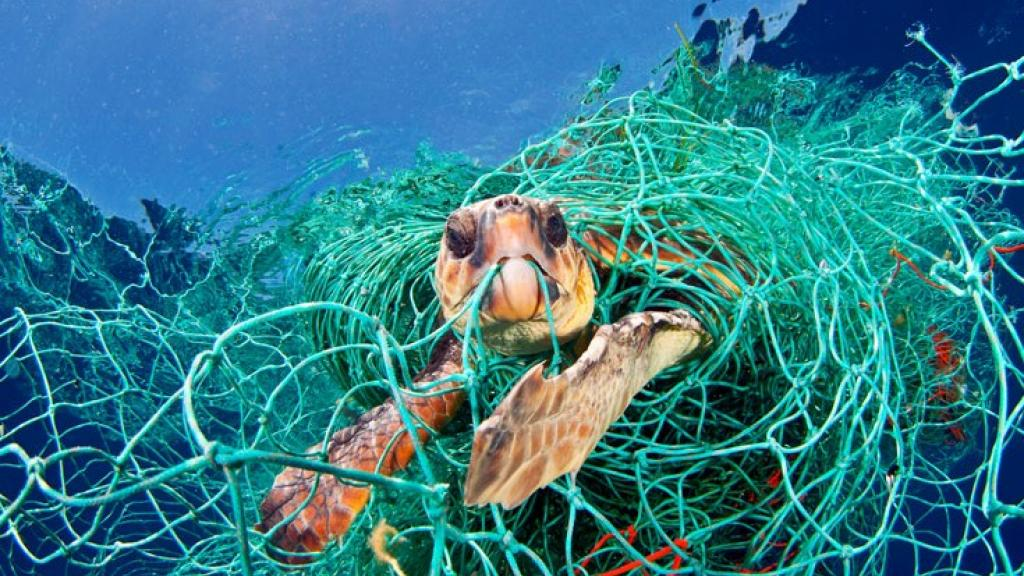 A sea turtle caught up in netting