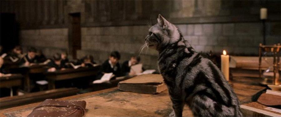 Professor McGonagall in Cat Form