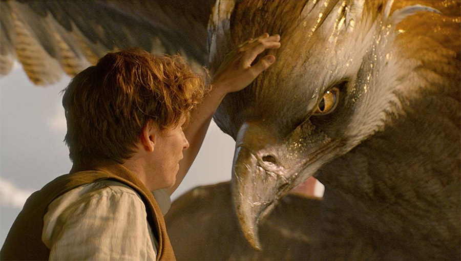 Fantastic Beasts and Where to Find Them Thunderbird