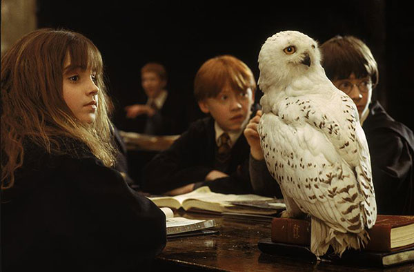 Harry, Ron, Hermione and Hedwig at Hogwarts