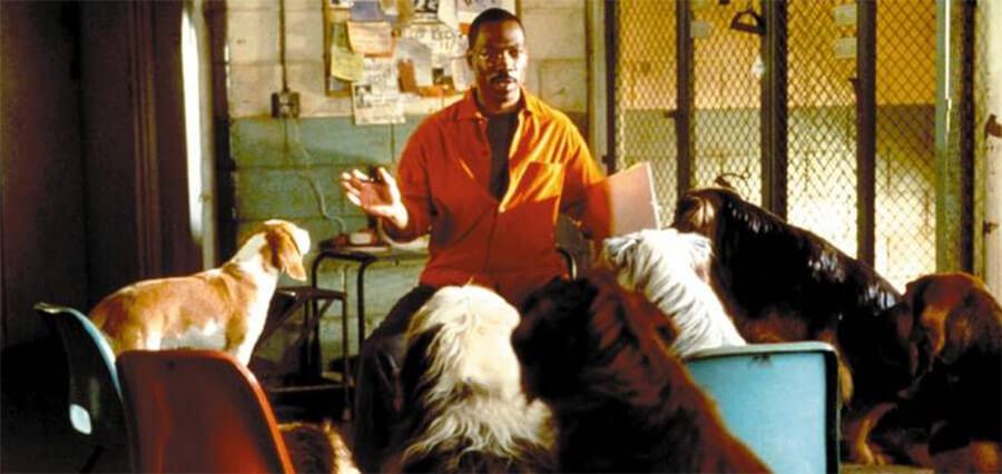 Eddie Murphy Dr. Dolittle Dogs