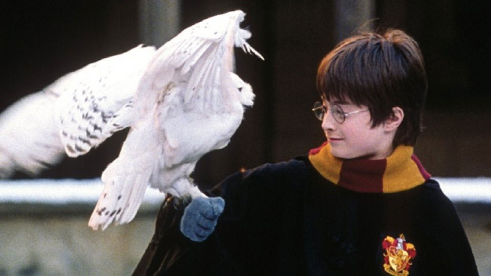 Harry Potter at Hogwarts with Hedwig