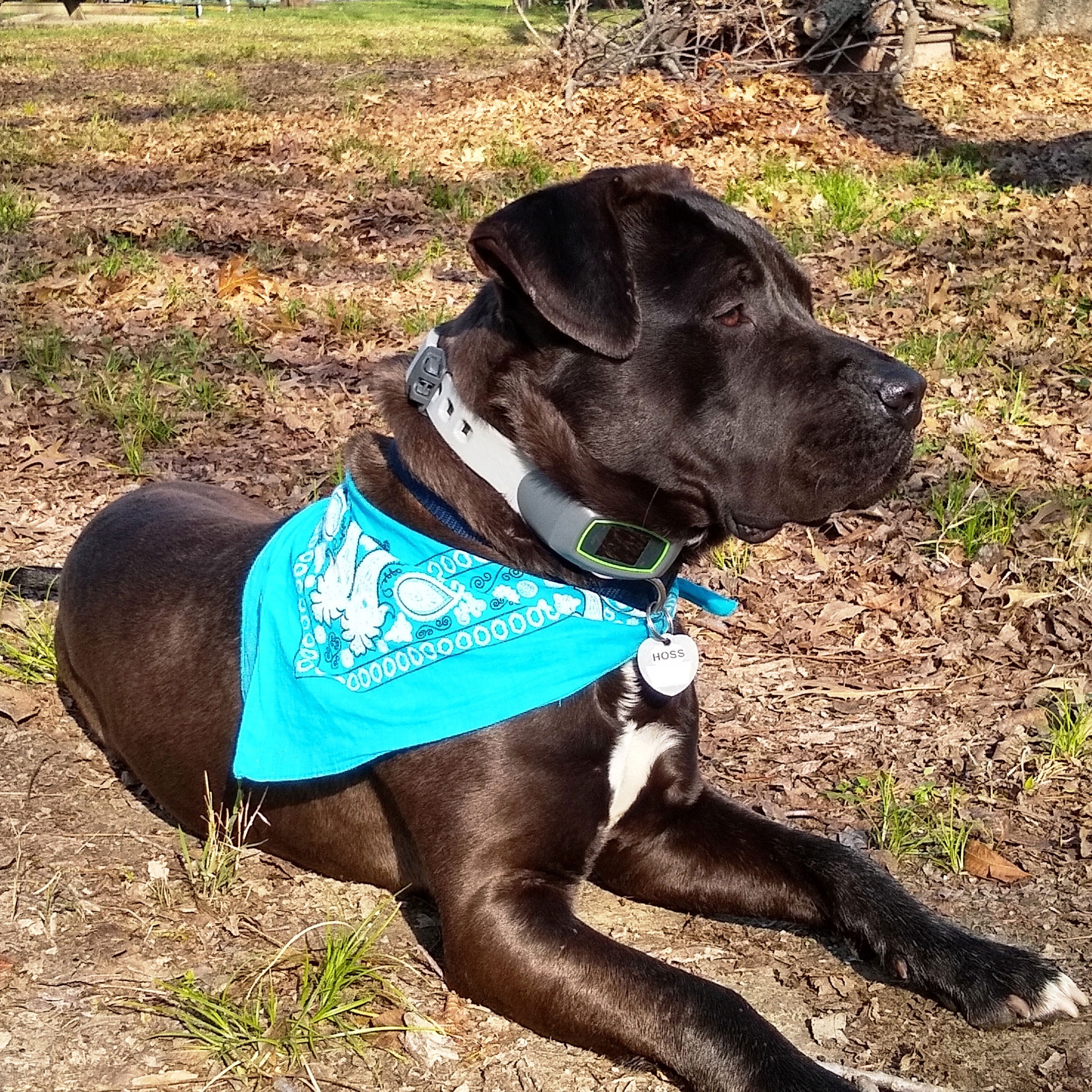 SpotOn dog review